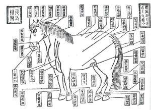 Figura descritiva do cavalo 相马图